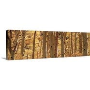 Premium Thick-Wrap Canvas entitled Aspen trees in a forest, Rock Creek Lake, California