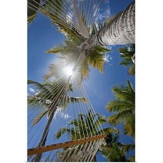 """Upward view through hammocks and palms, White Bay"" Poster Print"