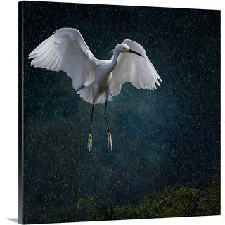 Premium Thick-Wrap Canvas entitled Stormy Snowy Egret