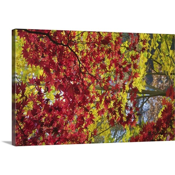 """""""Green and Red Acer tree"""" Canvas Wall Art"""