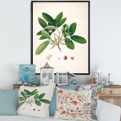 Designart 'Vintage Botanicals II' Farmhouse Framed Canvas Wall Art Print