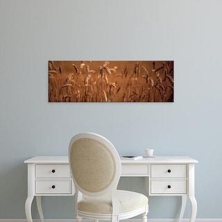 Easy Art Prints Panoramic Images's 'Detail Wheat' Premium Canvas Art