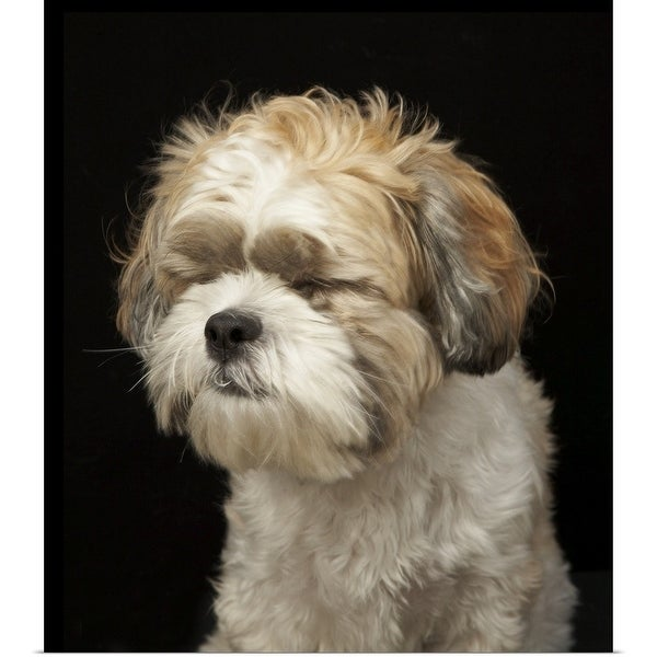 Shop Brown And White Shih Tzu With Eyes Closed Multi Color Free