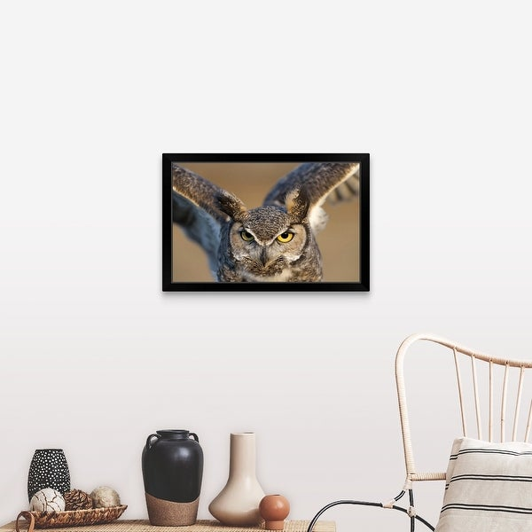 Great Grey Owl Flying 24x16 Framed Gallery Wrapped Stretched Canvas
