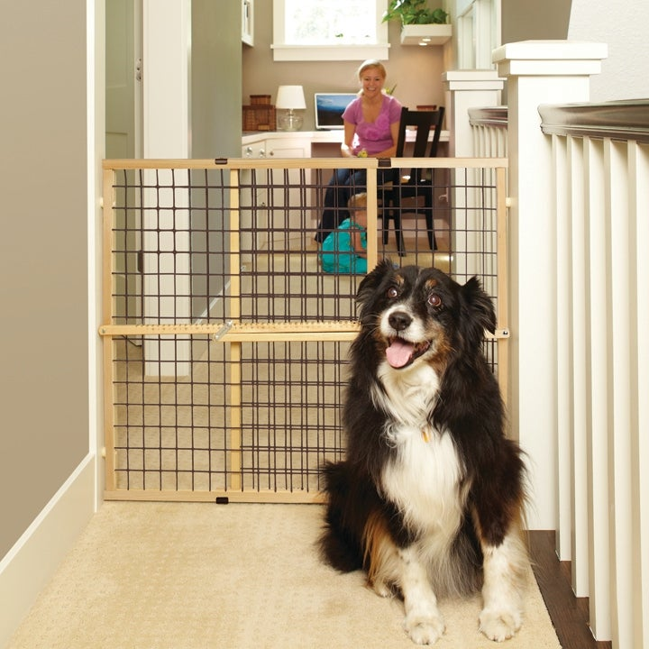 North States 4614A Extra Wide Expandable Wire Mesh Pet Gate, 32 x 29.5-50