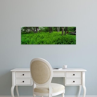 Easy Art Prints Panoramic Images's 'Trees in a fern forest, North Carolina, USA' Premium Canvas Art