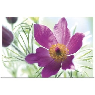 """""""Close up of purple flowers"""" Poster Print"""