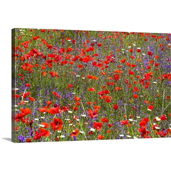 """""""Field of wild flowers, Umbria, Italy"""" Canvas Wall Art"""