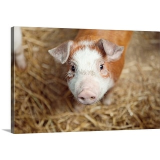 """Close up of piglet"" Canvas Wall Art"