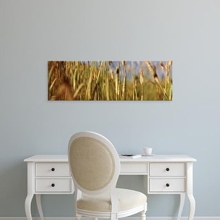 Easy Art Prints Panoramic Images's 'Tall grass in field, California, USA' Premium Canvas Art