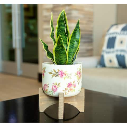 "12"" Artificial Plant Fake Snake Plant in Ceramic on Stand - ONE-SIZE"