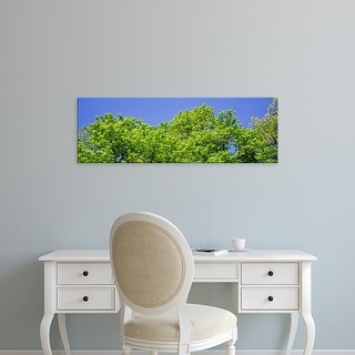 Easy Art Prints Panoramic Image 'Trees in a forest, Cook County Forest Preserves, Wheeling, Illinois' Canvas Art