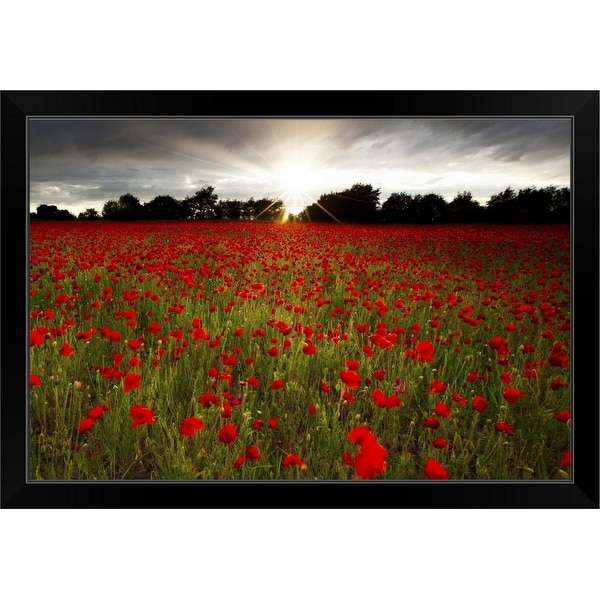 """Sun sets over poppy field, sun showing burst of rays against stormy sky."" Black Framed Print"
