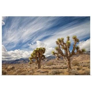 """""""Joshua Trees in desert"""" Poster Print"""