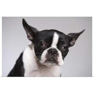 """Portrait of dog"" Poster Print"