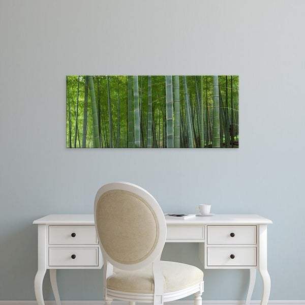 Easy Art Prints Panoramic Images's 'Bamboo trees in a forest, Fukuoka, Fukuoka Prefecture, Kyushu, Japan' Canvas Art
