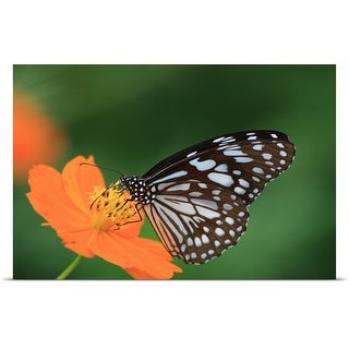 Poster Print entitled Butterfly on an orange flower