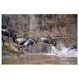 """Wildebeests crossing a river, Mara River, Masai Mara National Reserve, Kenya"" Poster Print"