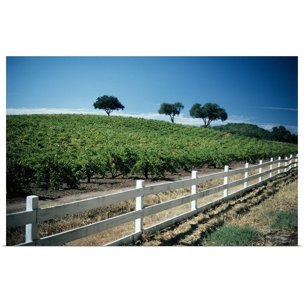 """Vineyard in Napa Valley, California"" Poster Print"