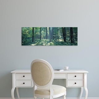 Easy Art Prints Panoramic Images's 'Forest Broome County NY USA' Premium Canvas Art