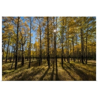 """Aspen trees in autumn, Banff National Park, Alberta, Canada"" Poster Print"