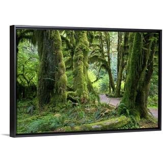 """USA, Washington, Olympic National Park, Hoh Rain Forest"" Black Float Frame Canvas Art"