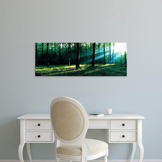 Easy Art Prints Panoramic Images's 'Forest Germany' Premium Canvas Art