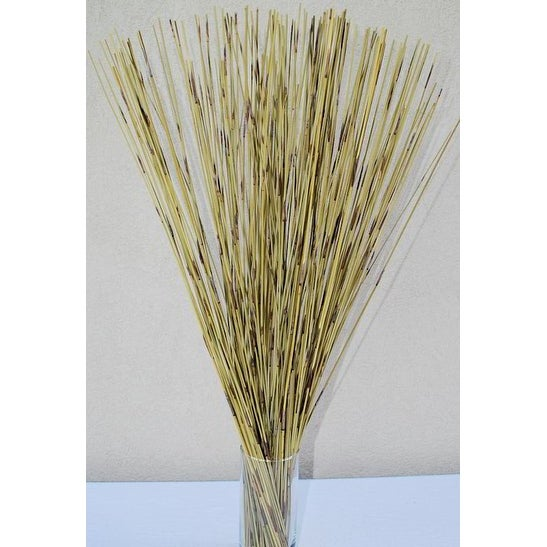 Green Pan Reed Bunch about 200 stems (large bunch) 30in  Long Small  drinking straw size -- Case of 15 bunches