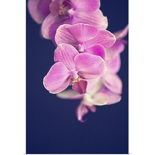 """""""Magenta Orchid"""" Poster Print"""