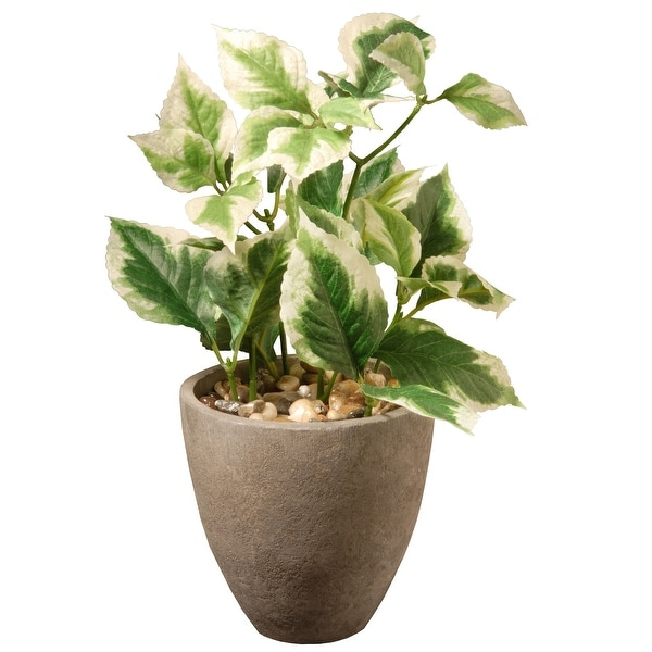Potted Pothos Accent Plant – 12 Inch - N/A