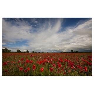 """Poppy field"" Poster Print"