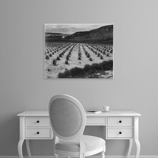 Easy Art Prints Ansel Adams's 'Corn Field, Indian Farm in Arizona' Premium Canvas Art