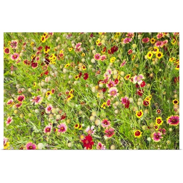 """""""Close-up of colorful wild flowers in a field"""" Poster Print"""