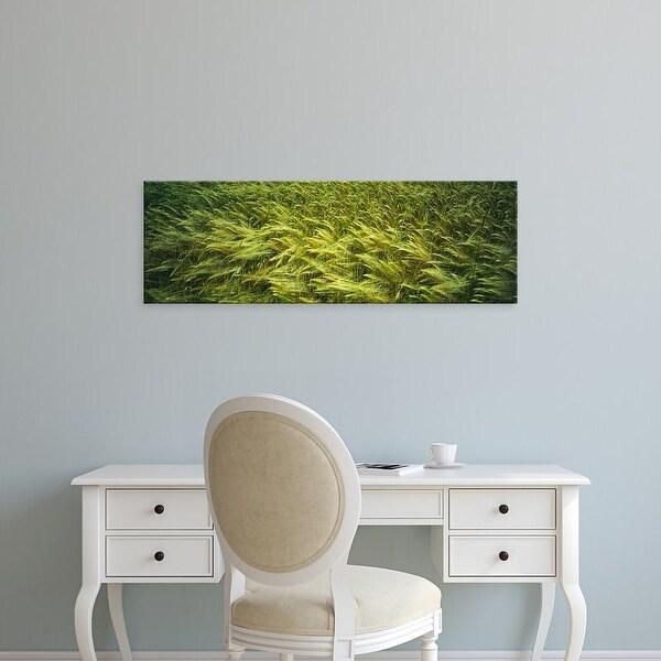 Easy Art Prints Panoramic Images's 'Close
