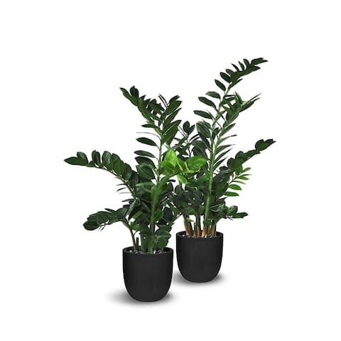 Faux Botanical Zamioculcas 2 Piece Set in Green Finish - 2 Piece Set