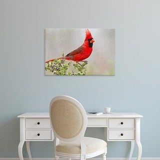 Easy Art Prints Larry Ditto's 'Northern Cardinal' Premium Canvas Art