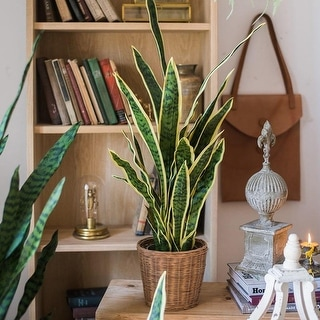 RusticReach Potted Artificial Snake Plant Yellow Edged Leaf