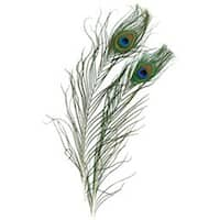 Natural - Peacock Eye Feathers 2/Pkg