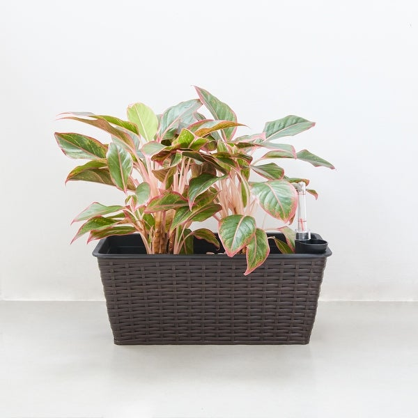 Quaqtaq Thin Rectangular Wicker Self-watering Planter in Espresso by Havenside Home. Opens flyout.