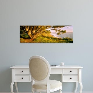Easy Art Prints Panoramic Images's 'Tree on the coast, Big Sur, California, USA' Premium Canvas Art