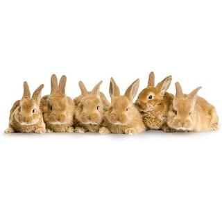 Paper House Diecut Card Row of Bunnies
