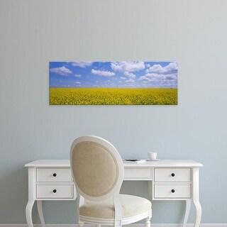 Easy Art Prints Panoramic Images's 'Field of canola plants, Cardston, Alberta, Canada' Premium Canvas Art