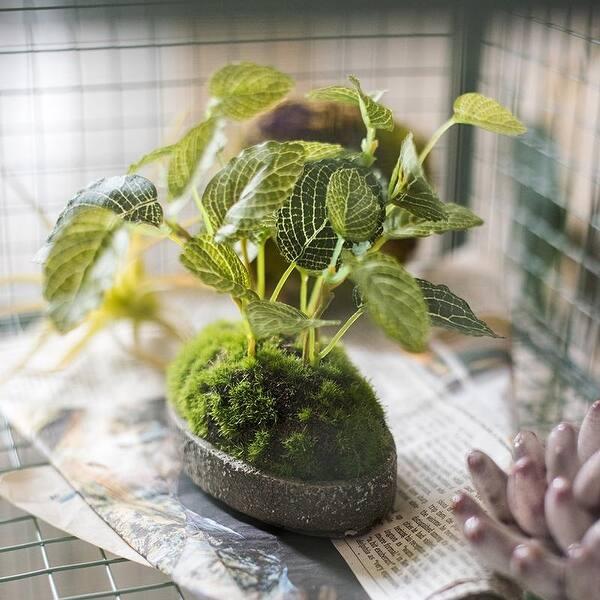 Rusticreach Artificial Mini Bonsai Reticulate Leaf Grass Moss Potted Plant Green Overstock 23387490