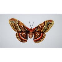 Eco Style Home esh125 Butterfly Wall Decor  Brown