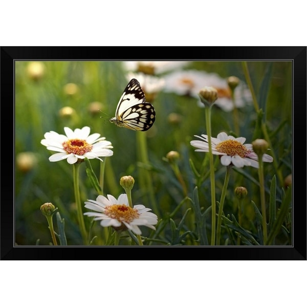 """Lone butterfly seeking out flower to land on."" Black Framed Print"