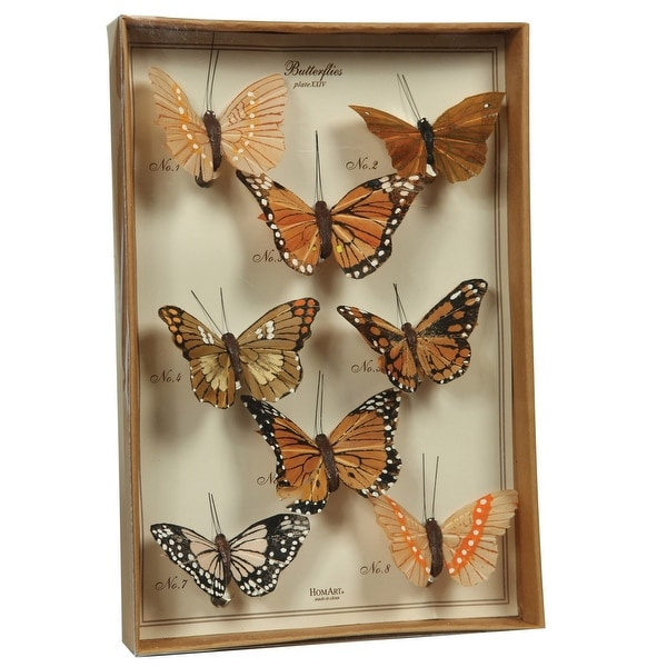 Feather 8 Piece Butterfly Accent Decor with Specimen Box, Brown. Opens flyout.