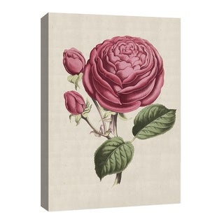"""PTM Images 9-126657  PTM Canvas Collection 8"""" x 10"""" - """"Vintage Rose"""" Giclee Roses Art Print on Canvas"""