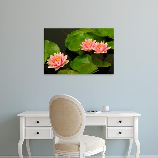 Easy Art Prints Corey Hilz's 'Three Pink And White Hardy Water Lilies' Premium Canvas Art