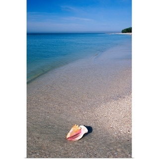 """Conch shell on beach"" Poster Print"