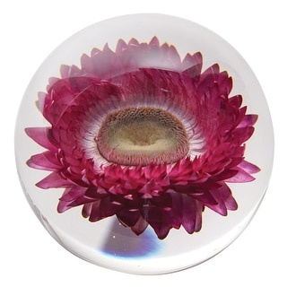 Dynasty Gallery Chrysanthemum Round Resin Paperweight - Real Preserved Pink Flower - 3 in. x 3 in. x 3 in.